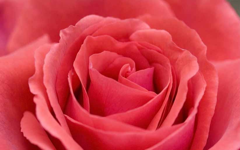 produits beauté à la rose