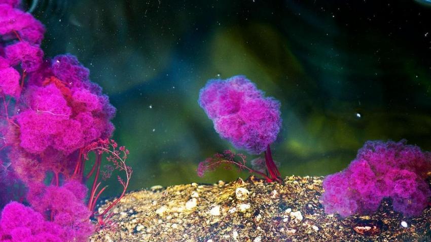Les algues pour la beauté