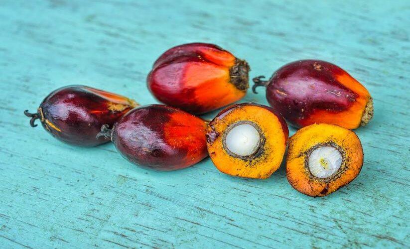 Et sinon, l'huile de palme, on en parle ?