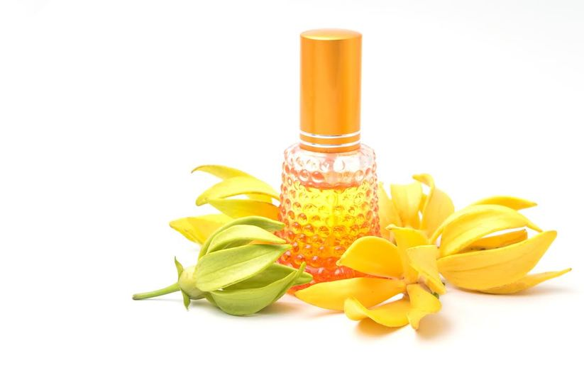 L'huile essentielle d'ylang-ylang et ses bienfaits pour le corps et les cheveux