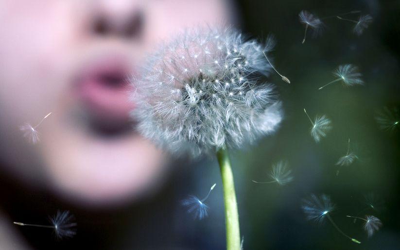 Allergie au pollen : comment s'en soulager ?