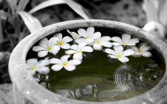 fleur de tiaré, une perle rare venue de Polynésie !