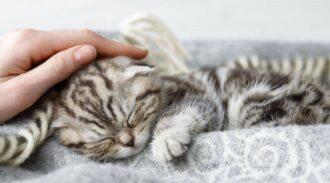 Le vaccin contre l'allergie aux chats devrait bientôt faire son apparition !