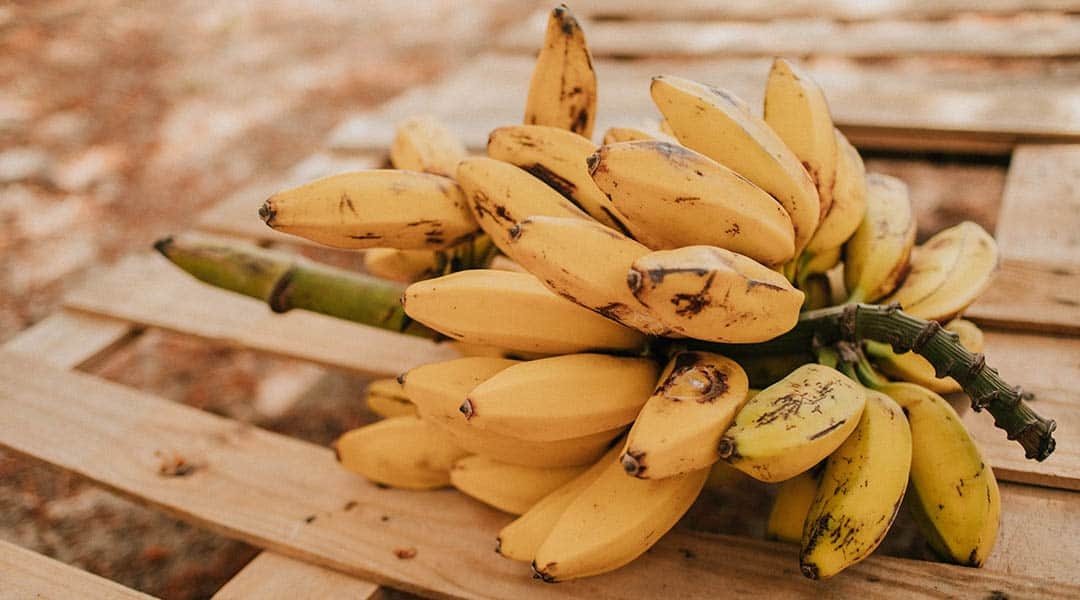fruits exotiques bananes
