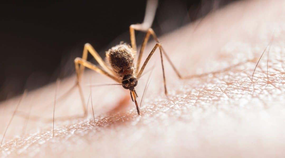 spray anti moustique maison